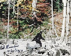 Creepy stories of cryptid monsters begins with this photo of an alleged Bigfoot