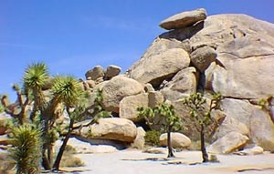 Photo of Cap Rock in Joshua Tree where Gram wanted his ashes spread